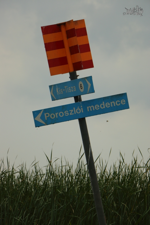 DPP_04082