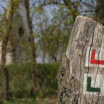 Időutazás a Pótharaszti erdőben