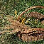Növényismereti séta az Amanita tanya szervezésében